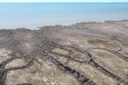Mangrove dieback at the Limmen Bight River mouth