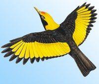 Birds of Australia app
