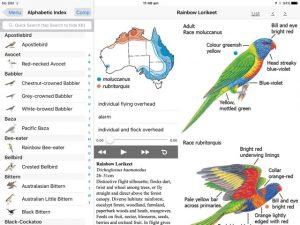 birds-of-australia-moorcombe03