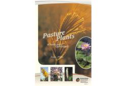 Pasture Plants of North-west Queensland
