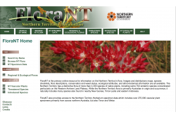 FloraNT Northern Territory Flora Online