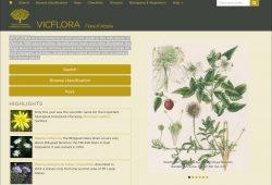 VicFlora Flora of Victoria