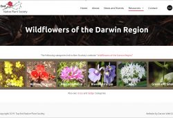 Wildflowers of the Darwin Region