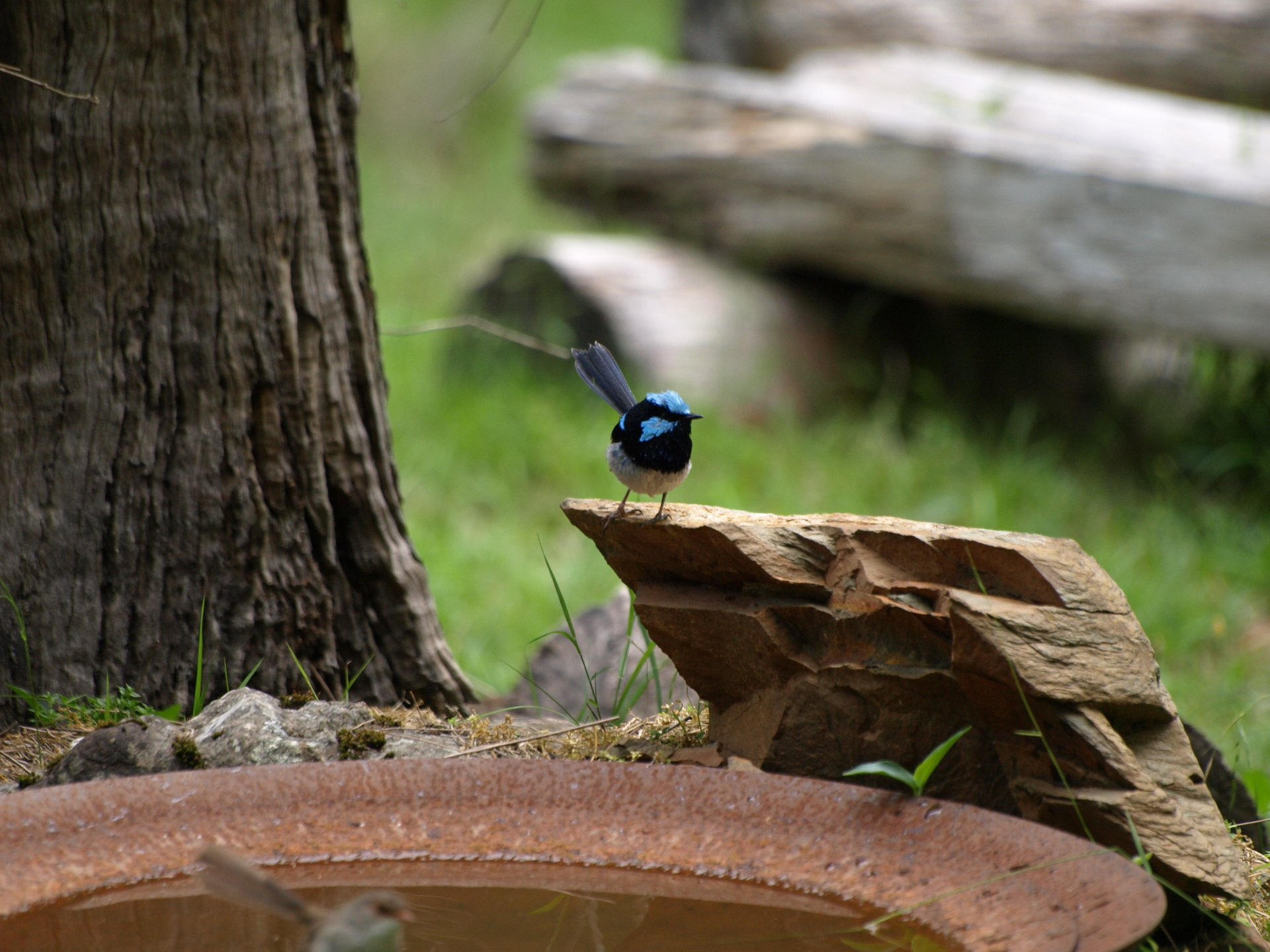 How to create a wildlife-friendly garden: bird bath