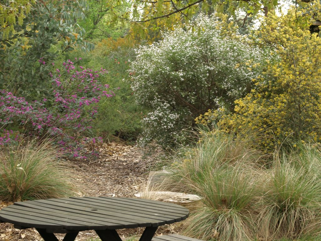 How to create a wildlife-friendly garden: mulch path