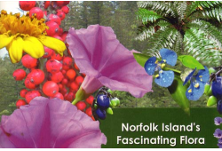 Norfolk Island's Fascinating Flora
