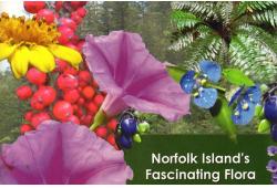 Norfolk Island's Fascinating Flora