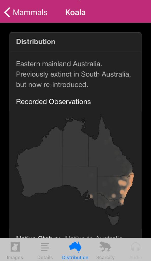 Field Guide to Queensland Fauna app, Koala
