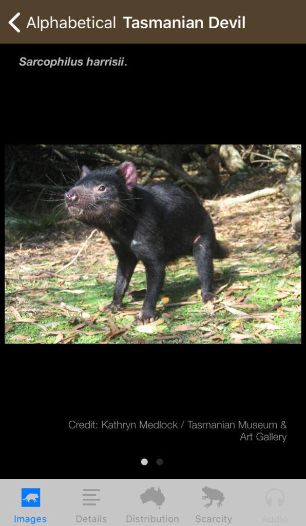 Field Guide to Tasmanian Fauna app, Tasmanian Devil