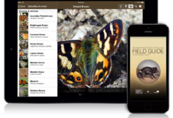 Field Guide to Tasmanian Fauna app