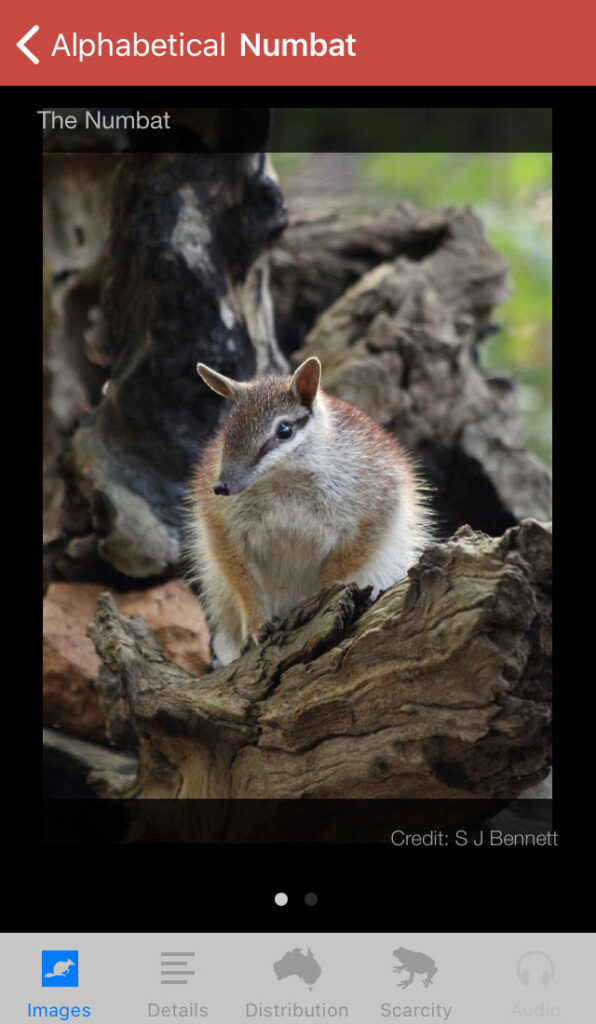 Field Guide to Western Australian Fauna app, Numbat