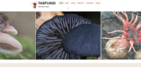 Tasfungi website
