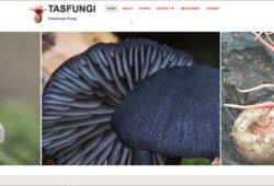 Tasfungi website