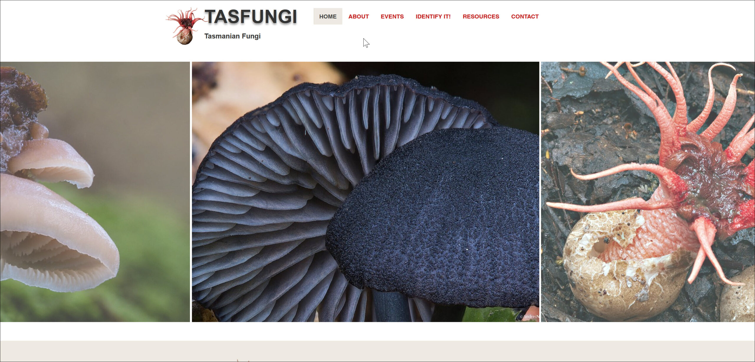 Tasfungi website Book Cover