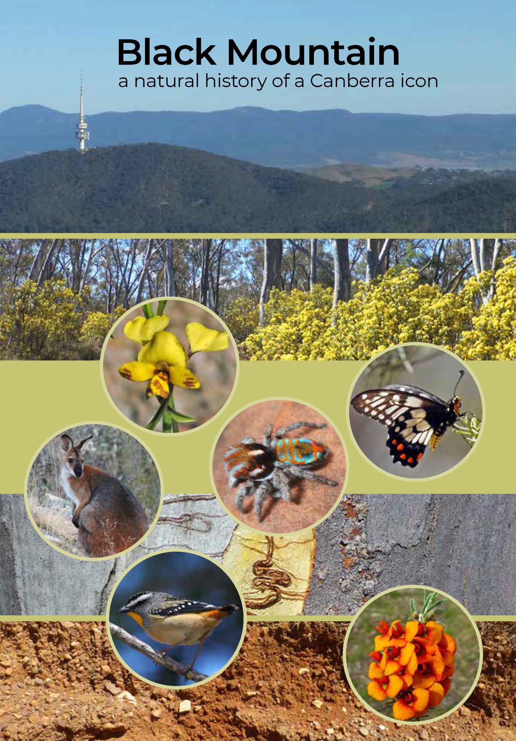 Black Mountain: a natural history of a Canberra icon Book Cover