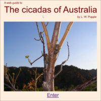 The cicadas of Australia