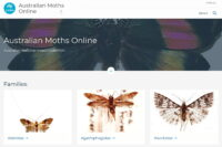 Australian Moths Online website