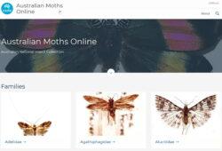Australian Moths Online website