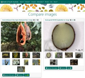Seeds of South Australia website, compare images feature